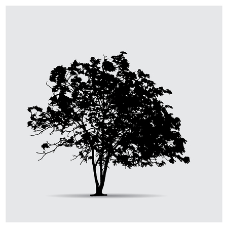 mixed forest: Vector tree silhouettes