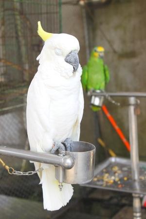 canny: bird