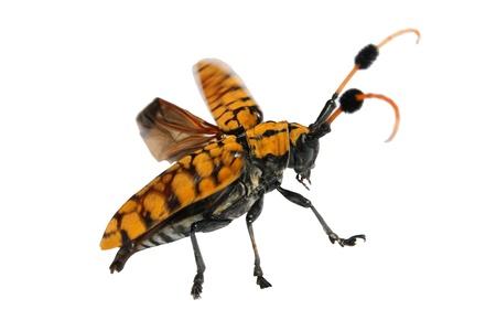 hexapod: bug
