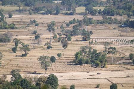 champ de mais: champ de bl�