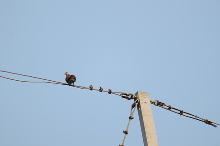 animal watching: Bird on a wire