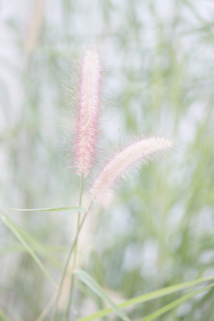 elated: Grass Stock Photo