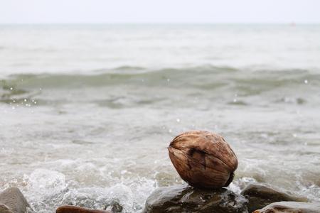 ashore: Coconut ashore