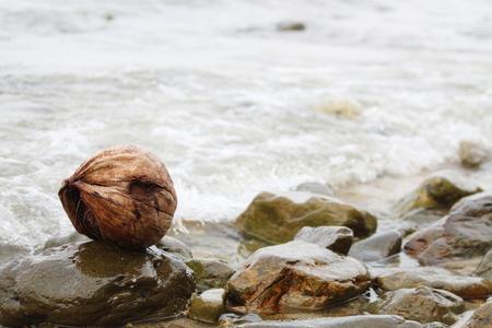 flink: Coconut Land