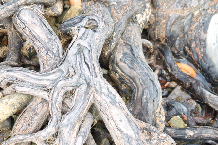 uncombed: tree roots