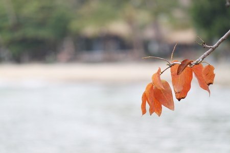 forlorn: Leaves is in the Beach