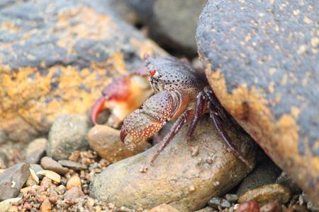 flink: Crab im Meer