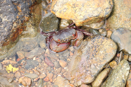 existence: Crab in the sea