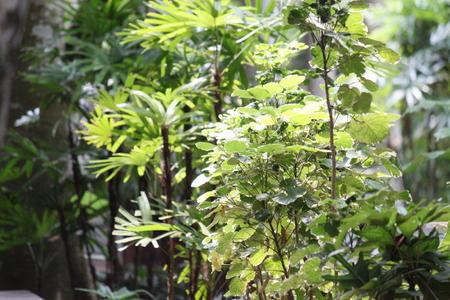 arbour: plant