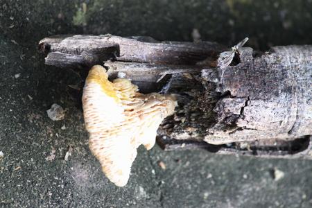 putrefy: mushroom log