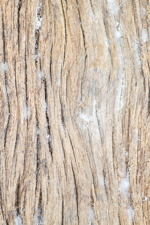 wooden partition: grain wood Stock Photo