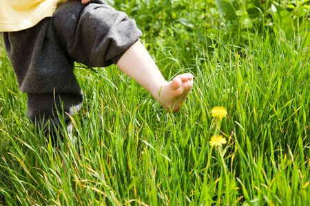 bare foot of the child over dandelion photo