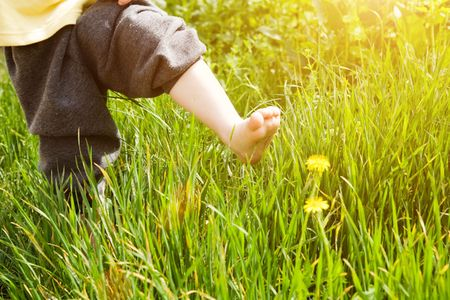 bare foot of child over dandelion