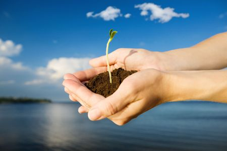 shoot: small sprout in the hands over the water and blue sky Stock Photo