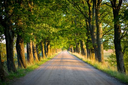 tunnel of green trees on sunlight photo