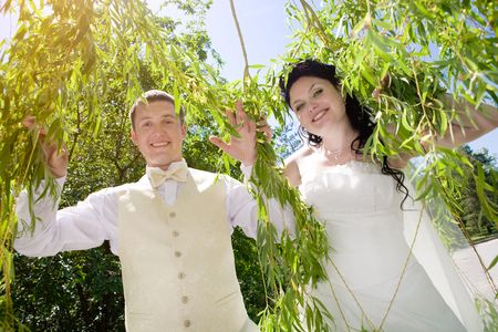 bride and groom in the branches of the tree photo