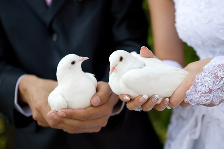 two white pigeons in hands