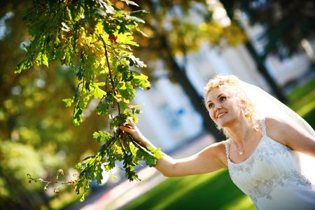 bride and oak tree photo
