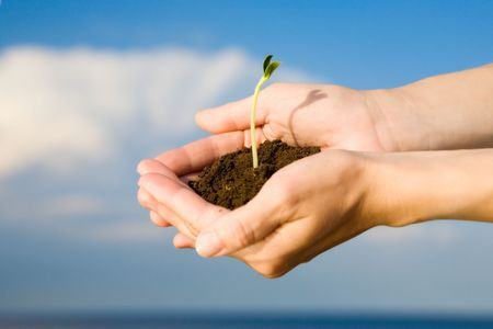 hand holding plant: small sprout in the hands over the water and blue sky Stock Photo