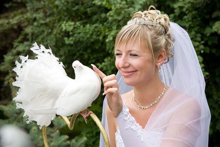 bride touching a white pigeon photo