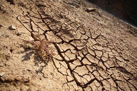 sunburned: dry cracky earth, clay and a flower bush