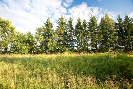 green forest and blue sky Stock Photo - 5372761