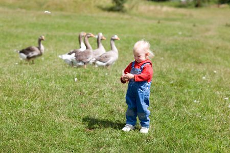child and geese in green grass photo