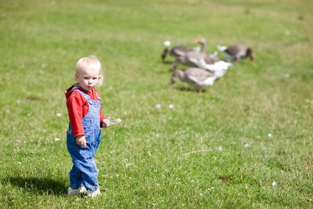 child and geese in green grass Stock Photo - 5442965