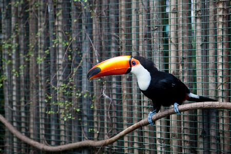 tucan on the brunch photo