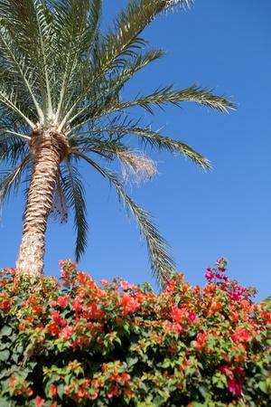 pa;m tree, blue sky and flowers Stock Photo - 11548762