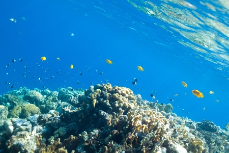hardcoral: fish and corals in the Red sea