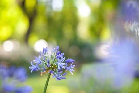 blured: one blue flower and lights Stock Photo