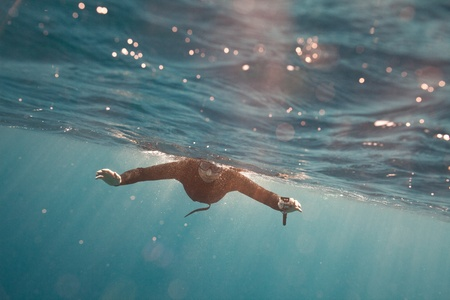 a portrait of freediver in water