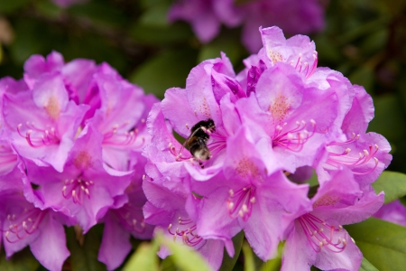 a bee on a flower Stock Photo - 13917764