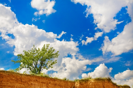 blu sky: green tree and blu cluody sky
