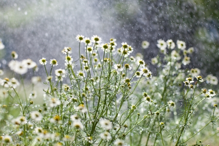light rain and flowers