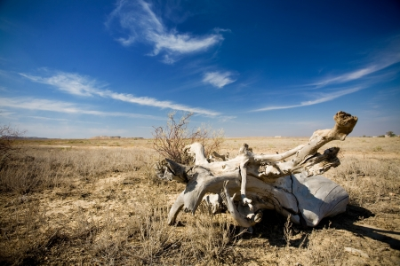 waterless: blue sky and dry tunk of the tree