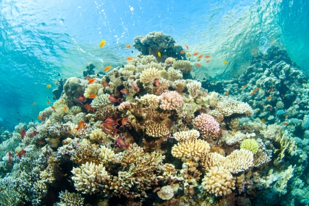 beautiful corals in the sea photo