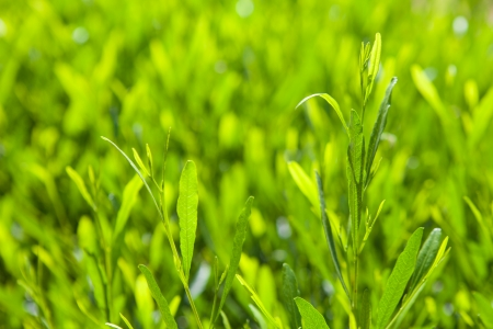 background with bright green leaves  photo