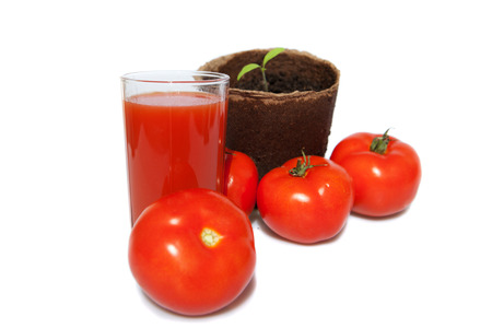 seedling of tomato, the same vegetables and juice photo