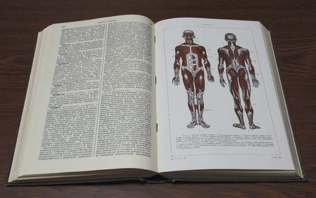 Un artículo sobre la anatomía humana en la Pequeña Enciclopedia Soviética edición 1937