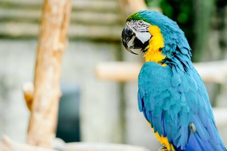 Portrait of colorful Scarlet Macaw parrot against jungle background 스톡 콘텐츠