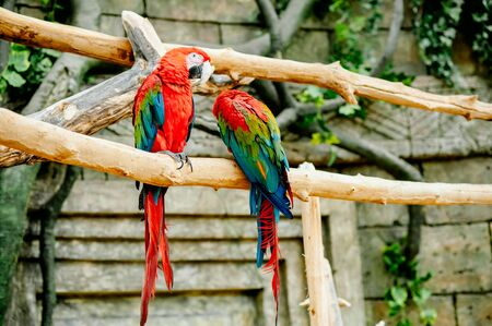 macaw sitting on a branch in the wild