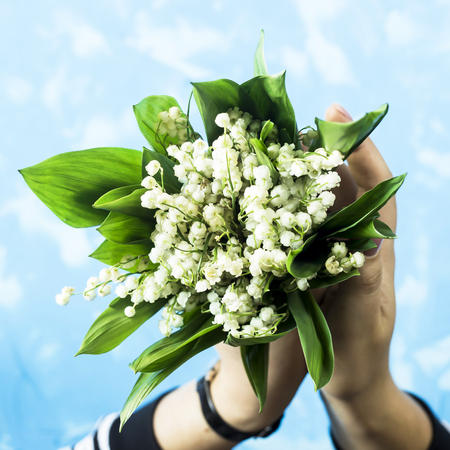 A bouquet of lilies of the valley in female hands on a blue background. Top view, flat lay Stock Photo