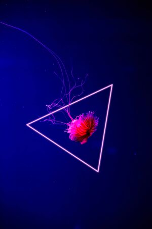 Jellyfish in an aquarium with blue dark water is highlighted with red neon and in frame. Abstract trendy background