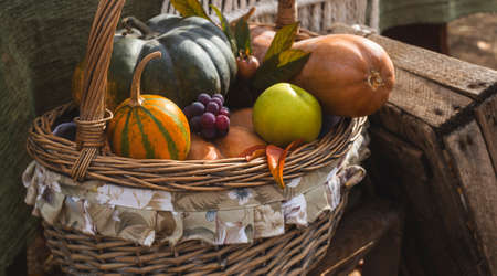 Autumn harvest of pumpkins, apples and grapes in a basket as an autumn rural cottage decor. Thanksgiving in the backyard.