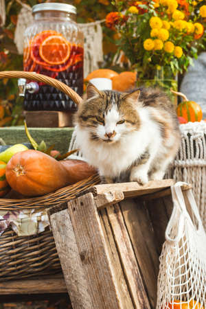 A rural cat among cottage decor in a rural backyard. Autumn slow life concept. Stockfoto