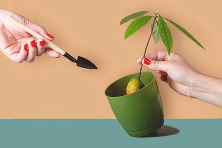 Houseplants in pots are a modern hobby for a slow life