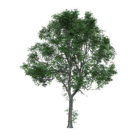 Green tree photorealistic 3D illustration, isolated on the white background.
