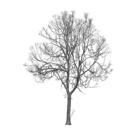 Leafless tree photorealistic 3D illustration, isolated on the white background.